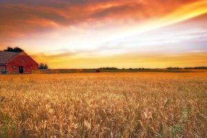 el final del día de la granja ... foto