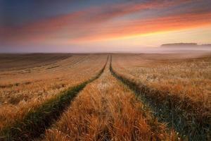 Amanecer colorido campo de grano con niebla y luz solar