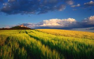 Pannonhalma Abbey with wheat and rapeseed field