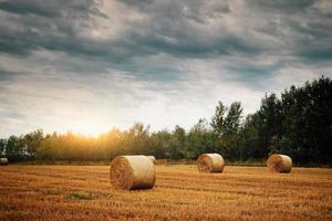 Bales on a field