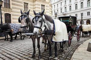 caballos en viena.