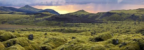 Paisaje surrealista con musgo lanudo al atardecer en Islandia