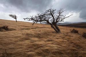 Trees on Tierra del Fuego, Patagonia, Argentina photo