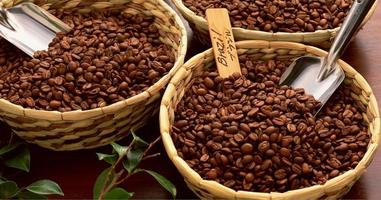 granos de café foto
