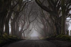 The Mystery of the Dark Hedges photo