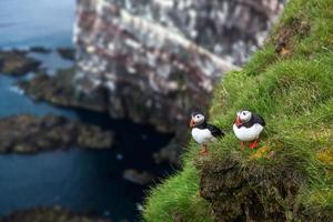 Two Puffins on top of a cliff
