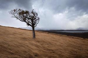 Tree on Tierra del Fuego, Patagonia, Argentina photo