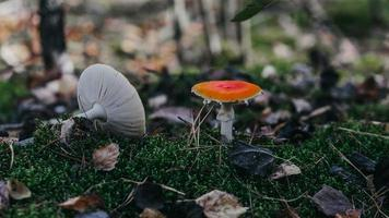 Orange and white mushrooms