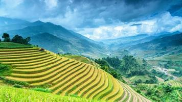 Vietnam Rice Terraces photo