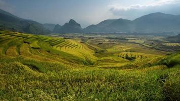 terraced rice field in sunshine, Yen Bai, Vietnam. photo