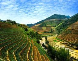 Rice field on terraced in vietnam