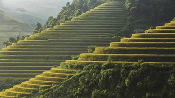 Rice fields prepare the harvest at Northwest Vietnam photo