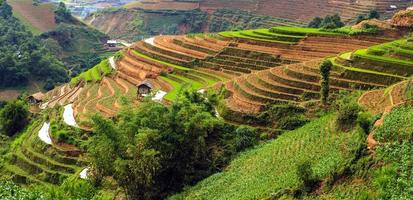 Terraced rice field photo