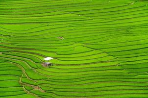 green terraced rice fields agriculture in sapa vietnam
