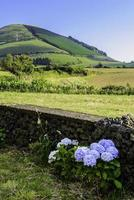 View on countryside of Sao Miguel, Azores, Portugal, Europe