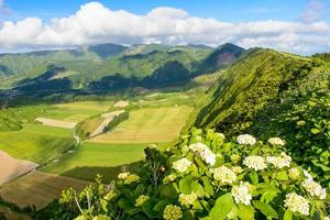 Mountain landscape with hortensia's, Azores, Portugal, Europe