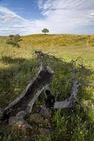 paisaje rural de la región del algarve