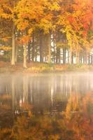 reflexos de outono.