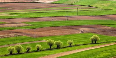 Polish fields in the spring photo