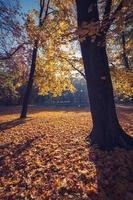Parque colorido del otoño en la mañana soleada en Cracovia, Polonia