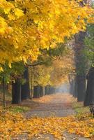 beco de árvores coloridas no parque de outono, cracóvia, polônia