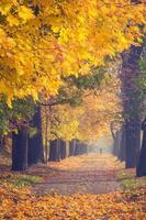 colorido callejón de árboles en el parque de otoño