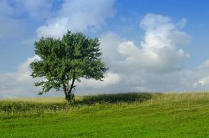 árbol solitario en el campo foto