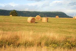 colheita de feno no prado