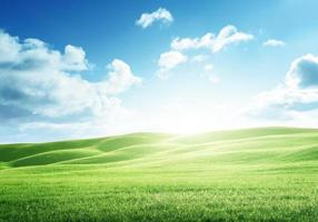 campo perfeito de grama de primavera