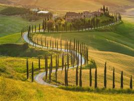 Beautiful cypress-lined road in the light of the setting sun