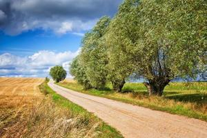 country path with willows photo