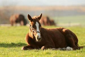 pony en el prado
