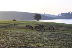 caballos y árbol solo