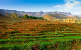 hermoso valle en sonla, vietnam