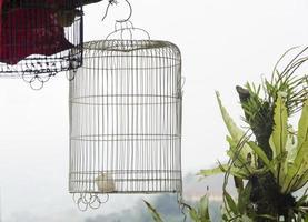 bird cage in Sapa, Vietnam photo