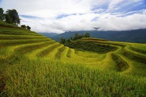 Terraced fields in Hoang Su Phi, Ha Giang, Vietnam.