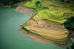 Rice fields on terraced