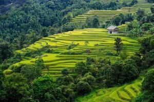 Terraced fields in Mu Cang Chai, Ha Giang photo