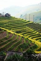 Rice fields on terraced photo