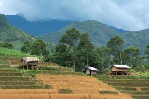 Most Beautiful Rice Terrace in Sapa, Lao cai, Vietnam photo