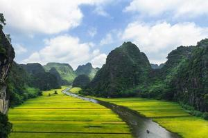 Rice field and river photo