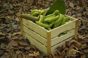 plátanos verdes en cajas de madera, hechos de palet. foto