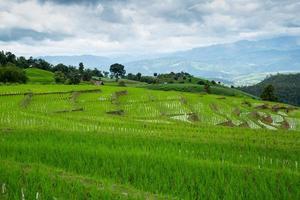 Green rice field terrace.
