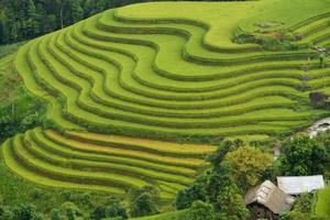 Terraced fields in Mu Cang Chai, Ha Giang