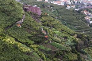 Madeira Island photo