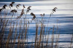Dry grass in winter time, Poland.