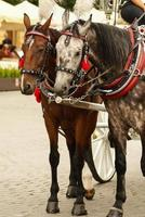 Krakow, Poland, Horse drawn carriages with guides
