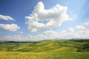 Yellow meadow in Val d'Orcia Tuscany, Italy