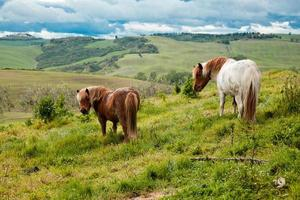 Typical Tuscan landscape with horses photo