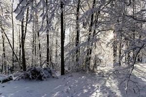 The Polish Pomerania winter
